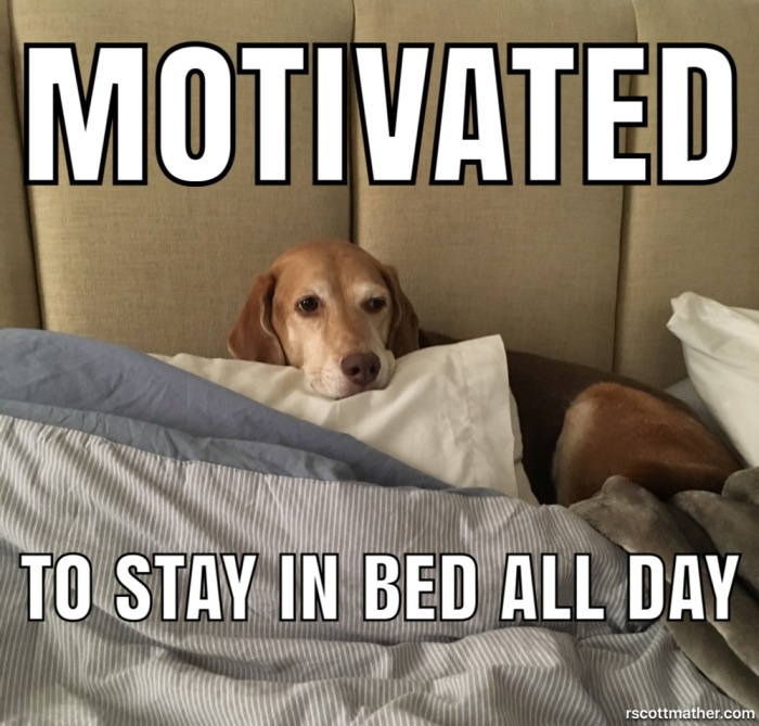 Unmotivated Dog in Bed